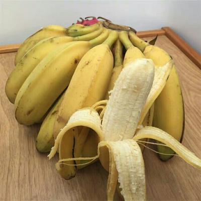 广东省广州市南沙区海南蕉 八成熟