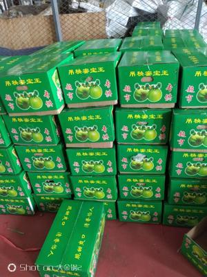 山东省潍坊市寿光市绿宝石甜瓜 0.5斤以上