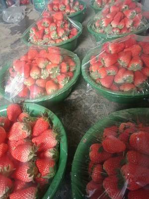 浙江省杭州市建德市红颜草莓 20克以上