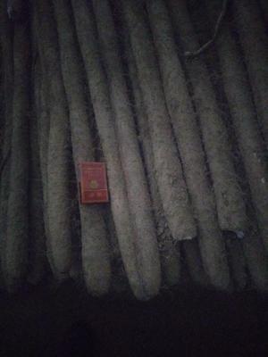 灞变笢鐪佽亰鍩庡競鑾樺幙鐧界帀灞辫嵂 40~50cm