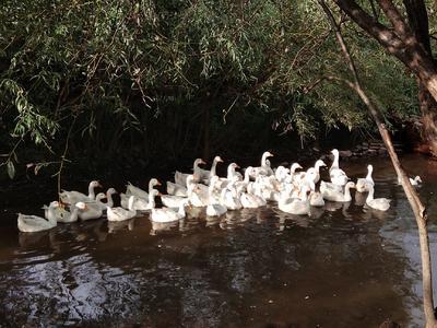 吉林省白山市江源区绿壳河鸭蛋 食用 箱装