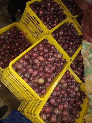 广西壮族自治区贺州市钟山县紫色百香果 70 - 80克