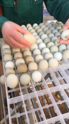 湖南省娄底市双峰县绿壳鸡蛋 食用 箱装