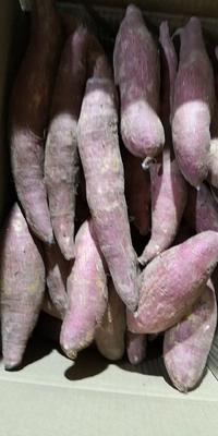 河北省保定市雄县济薯26号红薯 混装通货 紫皮