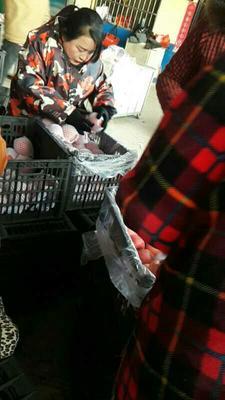 陕西省咸阳市礼泉县红富士苹果 75mm以上 片红 纸+膜袋