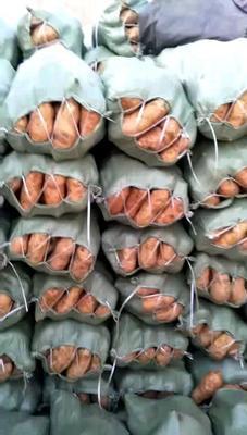 这是一张关于北京553红薯 6两~1斤 黄皮 的产品图片