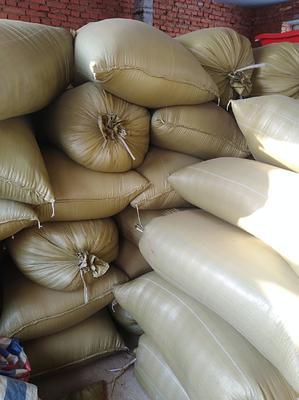 黑龙江省哈尔滨市尚志市五优稻4号大米 一等品 晚稻 粳米