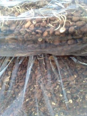 这是一张关于茶树菇 散装 半年 的产品图片