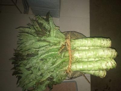 这是一张关于红叶莴笋 1.0~1.5斤 40-50cm 的产品图片