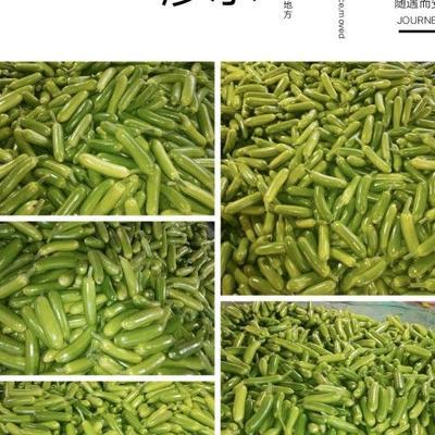 山东省潍坊市青州市绿皮西葫芦 0.9斤