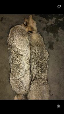 江西省上饶市信州区野兔 3-5斤
