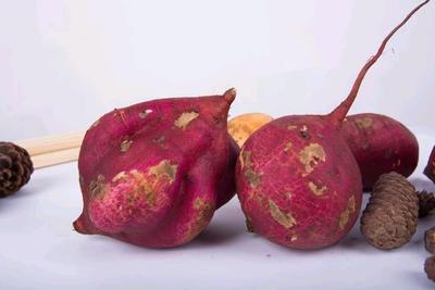 江西省宜春市万载县番薯 6两~1斤 红皮