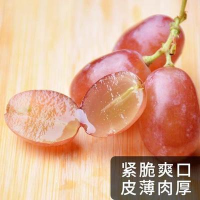 河北省衡水市饶阳县克伦生葡萄 1.5- 2斤 5%以下 1次果