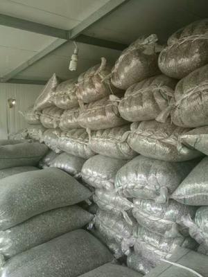 内蒙古自治区巴彦淖尔市乌拉特中旗葵花361 袋装
