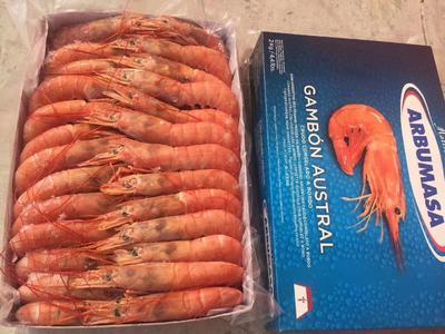 山东省青岛市即墨市阿根廷红虾
