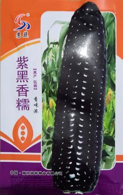 河南省南阳市卧龙区甜糯玉米种子 三交种 ≥90%
