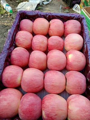 山东省临沂市沂水县红富士苹果 75mm以上 条红 纸+膜袋