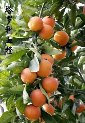 这是一张关于塔罗科血橙 60 - 65mm 4-8两 的产品图片