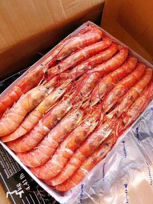 辽宁省丹东市东港市阿根廷红虾