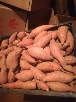 这是一张关于烟薯25 1斤~1.5斤 红皮 的产品图片