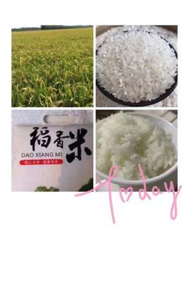 黑龙江省双鸭山市集贤县 稻花香大米 一等品 一季稻 粳米