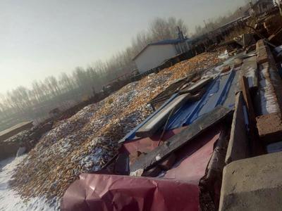 黑龙江省绥化市青冈县玉米湿粮 净货 水份17%-20%