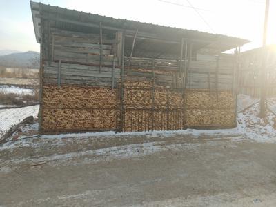 吉林省吉林市桦甸市玉米湿粮 杂质很少 水份20%-30%