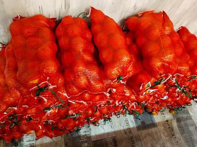 河南省新乡市红旗区冰糖橙 60 - 65mm 4-8两