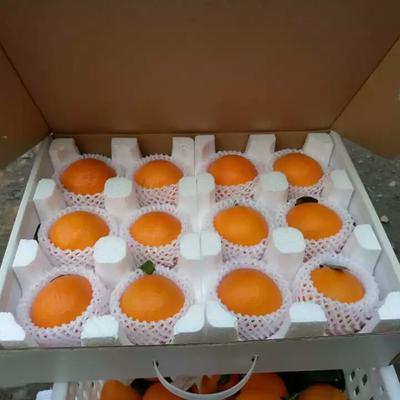 这是一张关于耙耙柑  统货 3两以上 泡沫柑橘专用箱的产品图片