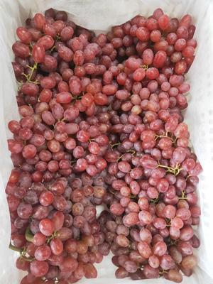 福建省福州市仓山区克伦生无核葡萄 1.5- 2斤 5%以下 1次果