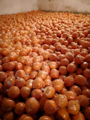 四川省眉山市东坡区9号脐橙 70-75mm 4-8两