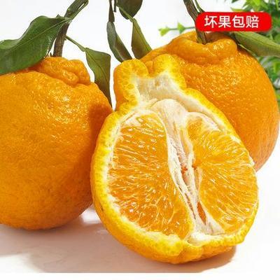 四川省成都市蒲江县耙耙柑 7.5 - 8cm 4两以上