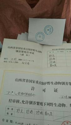 山西省运城市万荣县山地野兔 1-3斤