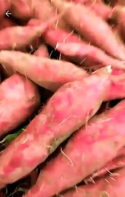 湖北省黄冈市团风县小香薯 混装通货 红皮