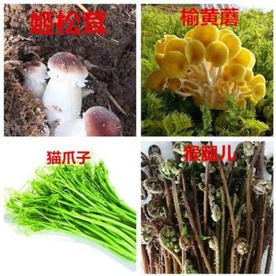 这是一张关于蒲公英(鲜食)  冬季新鲜山野菜供应的产品图片