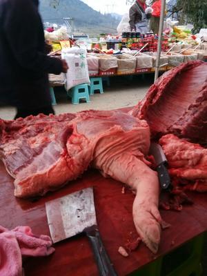 贵州省安顺市普定县猪肉类 生肉
