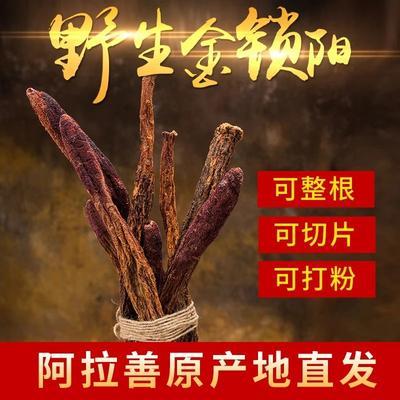 甘肃省酒泉市玉门市锁阳  散装 干燥 肉苁蓉锁阳野生特级