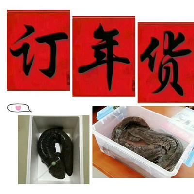 陕西省汉中市汉台区娃娃鱼人工养殖 5斤以下