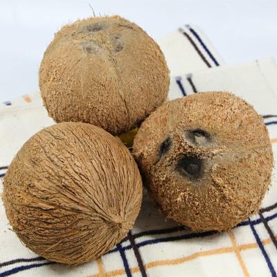 这是一张关于海南老椰子 1.5 - 2斤 的产品图片