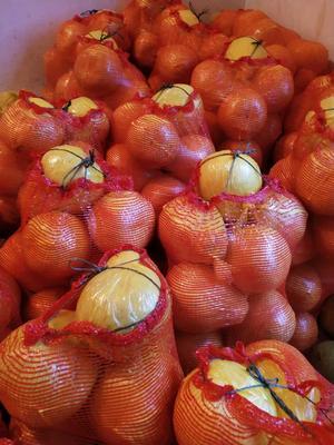 广西壮族自治区柳州市融安县沙田柚 2斤以上