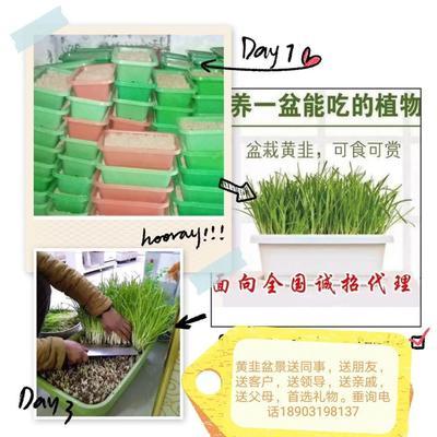河北省邢台市新河县韭菜根