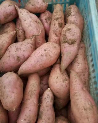 山东省临沂市沂水县黄心红薯  3两~6两 货源充足 价格便宜
