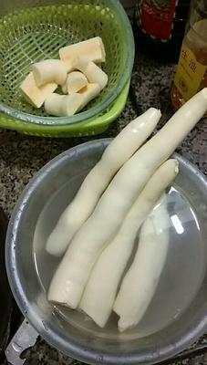 广西壮族自治区北海市铁山港区黄心木薯
