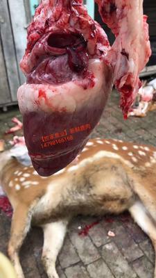 这是一张关于鹿茸草 新鲜梅花鹿肉的产品图片