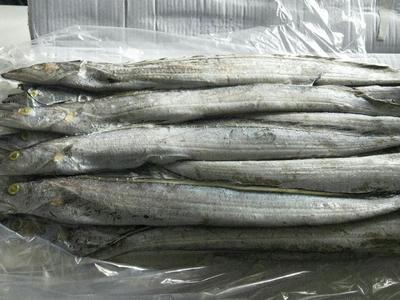 陕西省延安市黄陵县野生带鱼 野生 1-1.5公斤