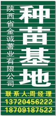 陕西省西安市临潼区秦薯5号红薯苗 25~35cm