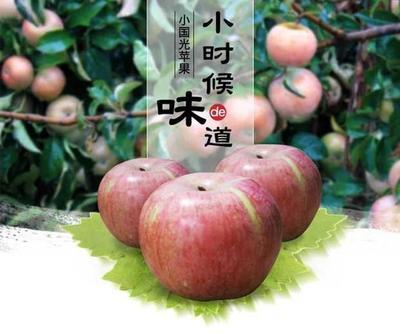 这是一张关于小国光苹果 60mm以下 表光 纸袋 的产品图片