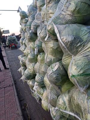 四川省凉山彝族自治州西昌市绿甘蓝 1.5~2.0斤