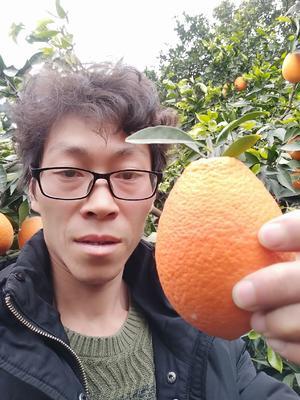 这是一张关于长虹脐橙 75 - 80mm 4-8两 的产品图片