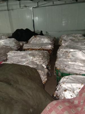 这是一张关于面姜 混装通货 水洗 的产品图片